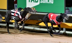 TRARALGON CUP: Long price but Allen thrilled at training his first group race finalist