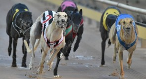Aston Dee Bee's form continues into the TAB Warragul Cup