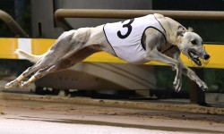 Harry's Elevated Warragul Cup hand