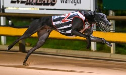 Smokey set for St Leger success